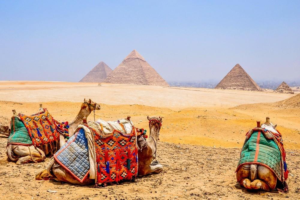 egypt pyramids giza camels